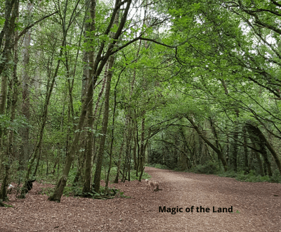 Magic of the land image