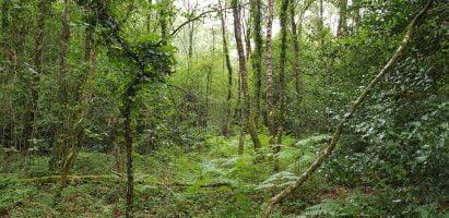 Wildwood Wanderings