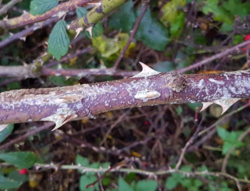 Thorns Embracing The Autumn Changing To Winter