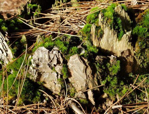 Woodland Walk To Blow Away The Cobwebs