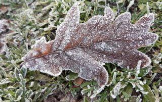 Winter Solstice Frost
