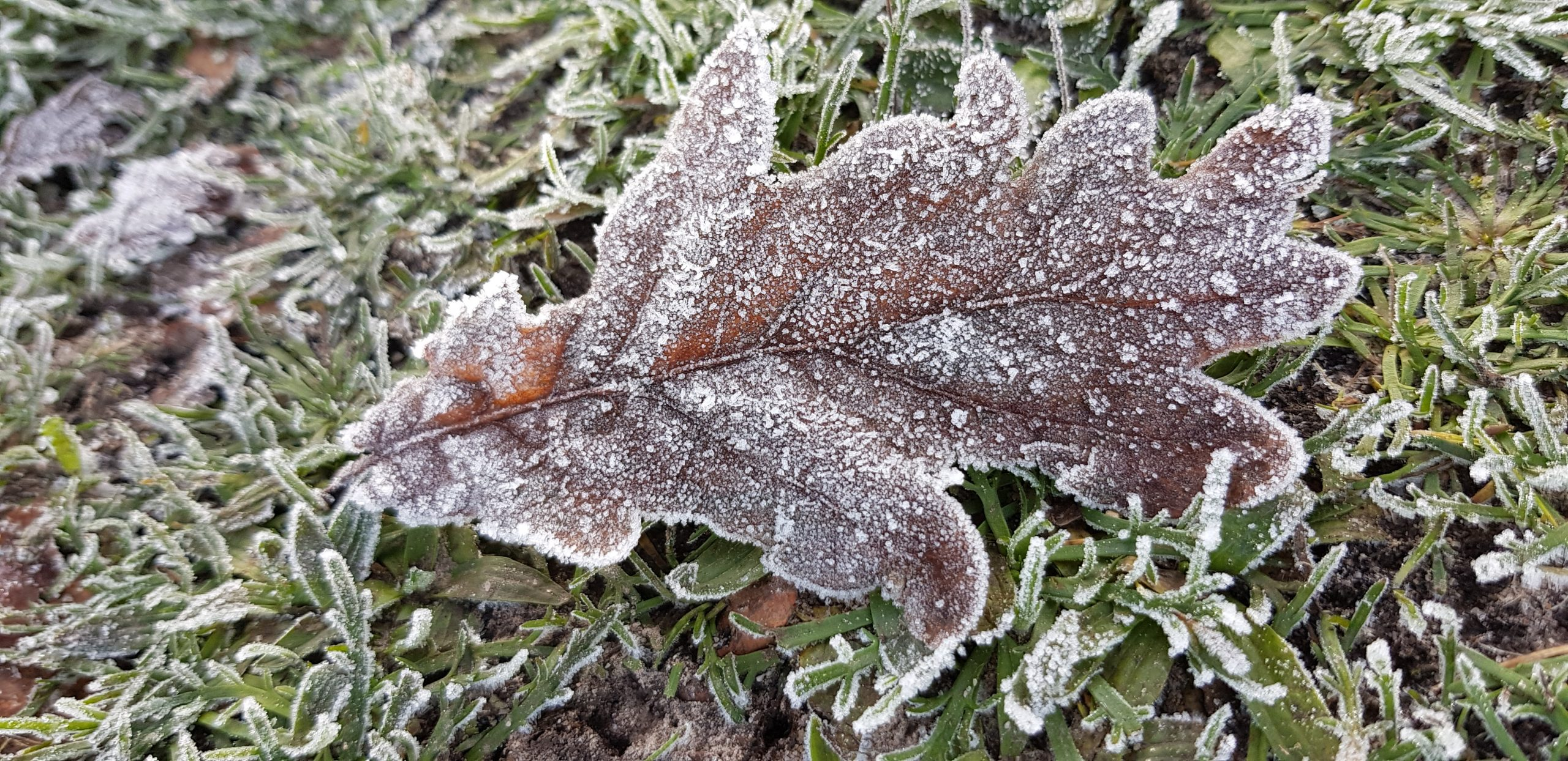 Winter Solstice Frost